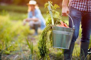 Cultivo do próprio alimento