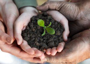 Conheça os benefícios de plantar o próprio alimento